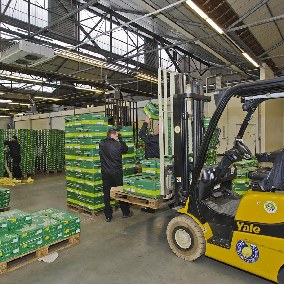 Komkommers en tomaten rechtstreeks uit de Westlandse kassen. Verser kan haast niet: het succesverhaal van Witkamp